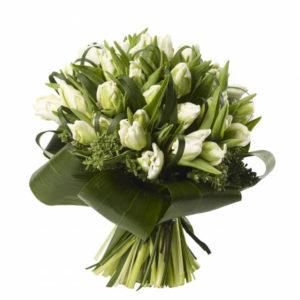 Bouquet de Tulipa Papagaio