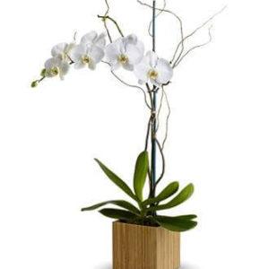 quadrado de madeira com orquideas branca