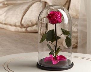 rosa preservada 2