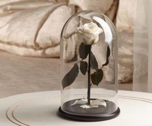 Campânula de Vidro Com Rosa Preservada Branca